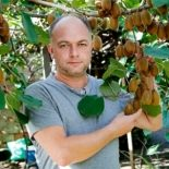 Дешевле яблок: как на Закарпатье выращивают морозостойкие киви
