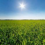 9 оттенков земельного законопроекта в Украине: возможности и риски
