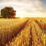 Экологический анализ устойчивого аграрного развития в условиях изменения климата