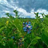 Елена Корогод : Я ожидаю появления реестра производителей органической продукции в феврале-марте 2021 г.