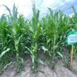 Все секреты успешного бизнеса MAS Seeds Украина: от научной базы до дистрибуции семян конечным клиентам