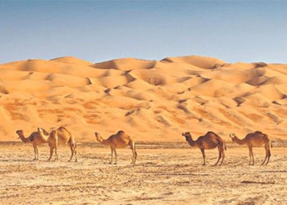 Туры в ОАЭ отдых Абу Муса